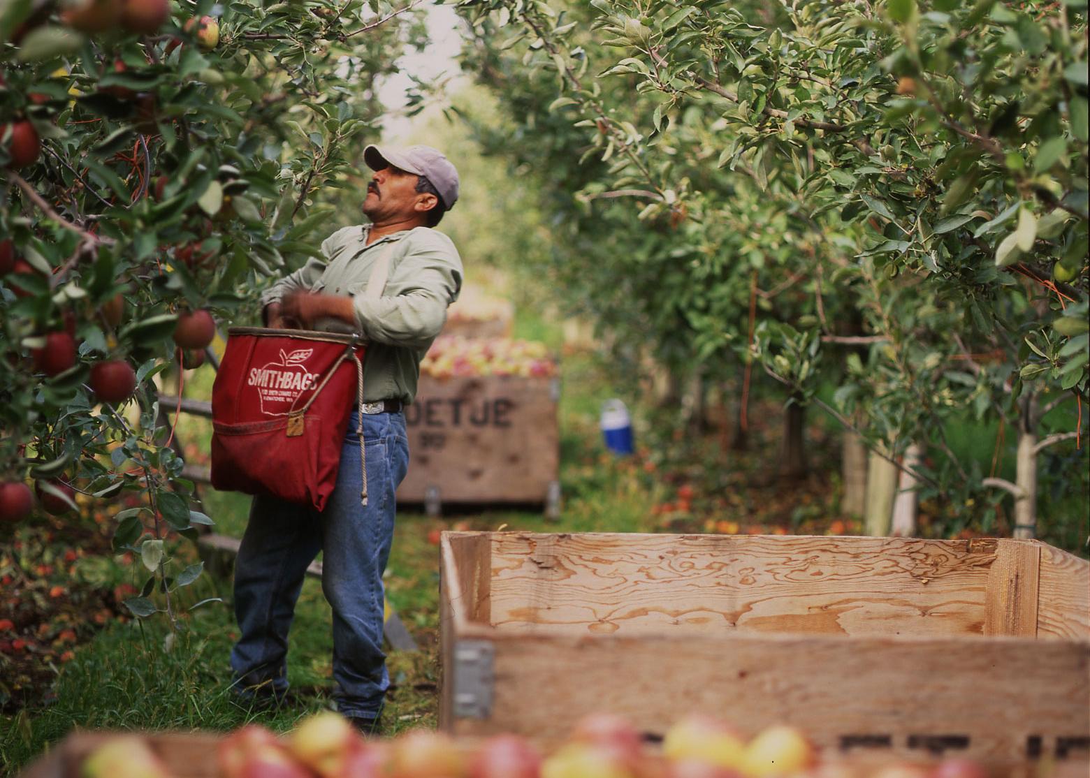 apple-picker_web-cropped
